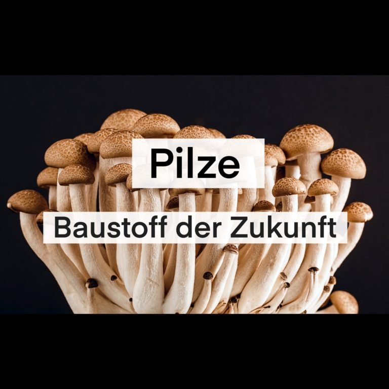 Pilze, Baustoff der Zukunft